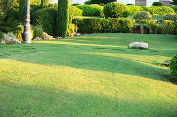 WideWater Lawn Care and landscaping